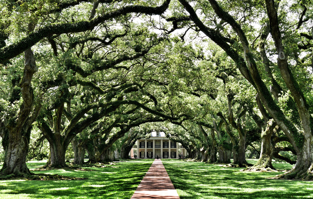Take a private jet to see the trees in front of a white house in New Orleans, Louisiana
