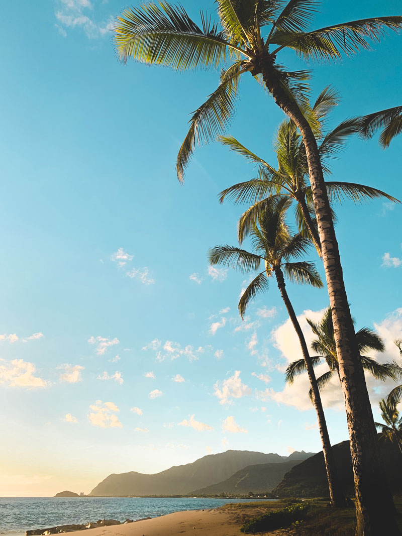 Private jet to Hawaii to see palm trees in front of blue sky on the beach