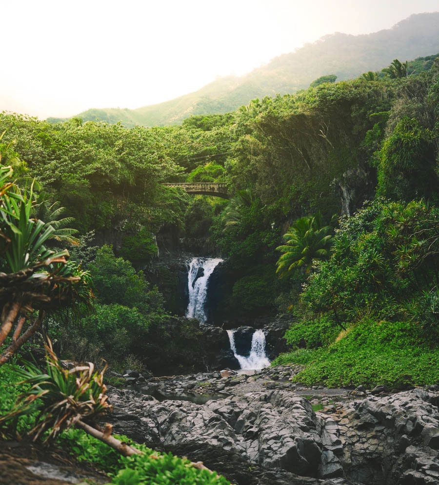 Private jet to Maui to the seven sacred pools with trees and waterfalls